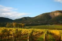 Vine to Wine Napa and Sonoma Day Trip plus Alcatraz Tour