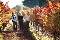 Vine to Wine Napa and Sonoma Day Trip with Tastings and Organic Winery Tour