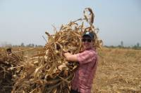 Volunteer for a Day in Phrao from Chiang Mai