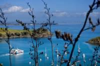 Waiheke Island Tour from Auckland