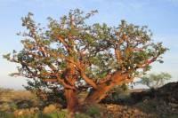Waikoloa Dryland Conservation Tour