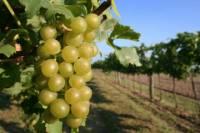 Waipara Wine Trail Tour from Christchurch
