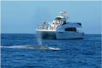 Whale Watching Experience with Live Commentary