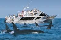Whale Watching Marine Wildlife Excursion from Victoria
