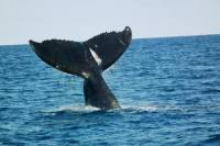 Whale Watching on Taboga and Taboguilla Islands