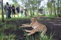 Wild Cat Experience Tour
