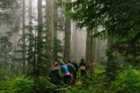 Wild Edible Plants - Rainforest Walking Tour with Lunch