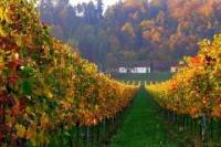 Wine and History Tour to Villany and Pecs from Budapest - Heritage of Hungary