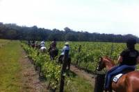 Wine Tour - Horse Ridding Tour in the Vineyards