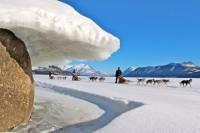 Yukon Dog Sledding Tour