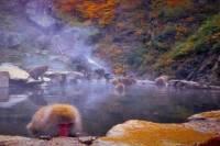 Zenko-ji Temple and Snow Monkey Day Tour