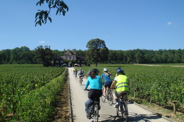 1 day bike and wine guided tour in Burgundy