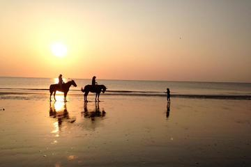 1-Hour Horseback Beach Ride on Jekyll Island