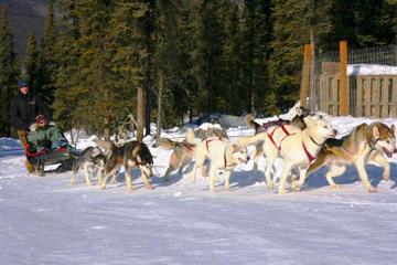 1-Hour Winter Dog Mushing and Sledding in Fairbanks