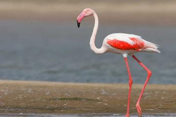 2-Day Independent Tour of Bharatpur Bird Sanctuary and Deeg Palace from Delhi by Private Car