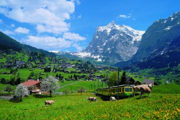 2-Day Jungfraujoch Top of Europe Tour from Zurich: Interlaken or Grindelwald