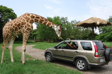2-Day Tour: Auto Safari Chapín Zoo and Monterrico Black Sand Beach from Guatemala City or Antigua