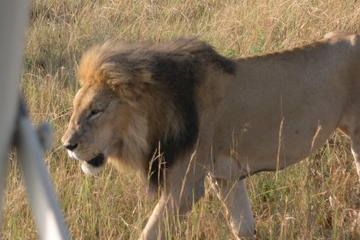 2-Night Maasai Mara Tour with Possible Lake Nakuru Extension