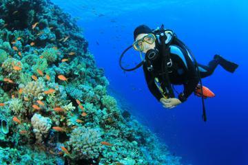 2-Tank Scuba Dive in St Lucia