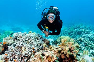 2-Tank Scuba Diving Tour from Providenciales