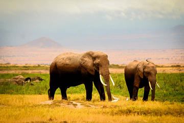 3-Day Amboseli Safari with Lake Nakuru on request