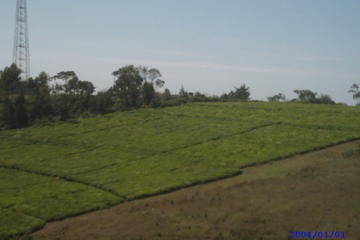 3 Day Local Tea and Coffee Farming Experience in Kenya