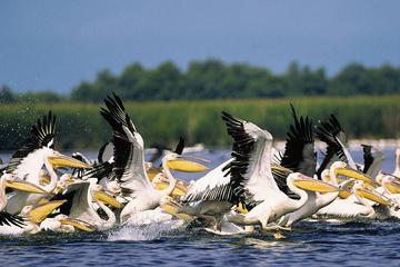 3-Day Small-Group Tour in the Wild Danube Delta
