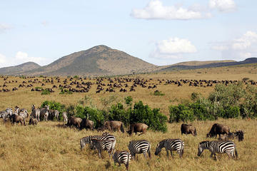 3 Days Masai Mara Camping Safari All Inclusive