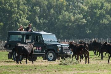 3 Hour Camargue 4x4 Safari