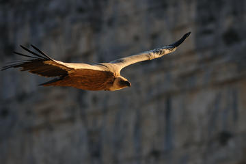 3 Hour Griffon Vultures and Verdon Gorges Tour from Moustiers Ste Marie