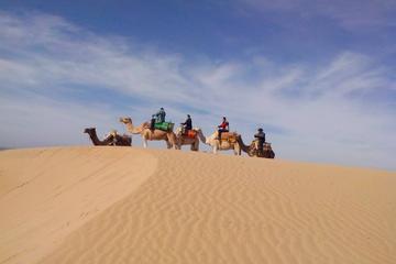 3 hours Dromedary Ride in Essaouira