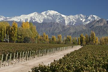 3-Night Tour to Mendoza by Air from Buenos Aires