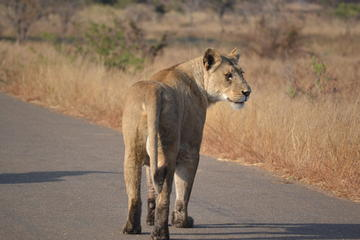 4-Day Hluhluwe Imfolozi and St Lucia Safari from Durban