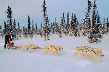 4-Day Northern Lights and Dog Mushing Adventure