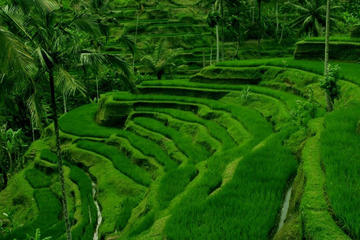 5-Day Bali Tour Series Including Day Trips and Water Sports
