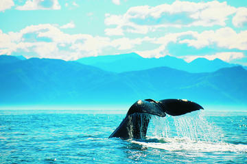 5-Day South Island Coastal Tour from Christchurch Including Blenheim and Abel Tasman National Park