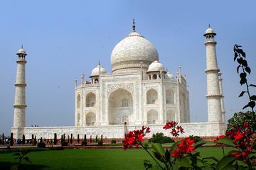 5-Nights Delhi, Jaipur, Ranthambore Tigers and Taj Mahal Private Tour