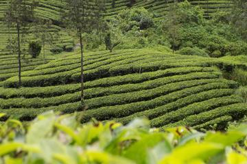 6-Day Best of Kerala Tour