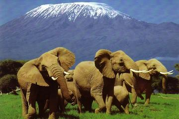 6 Days Amboseli, Lake Nakuru, Masai Mara Wildlife Safaris All Inclusive