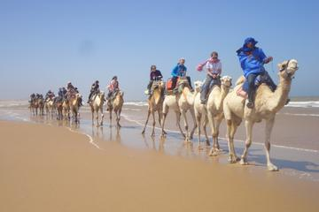 6 hour Camel ride in Essaouira with picnic