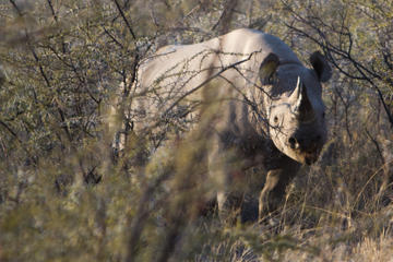 7-Day Best of Namibia Tour from Windhoek