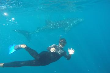 7-Day Ningaloo Reef Kayaking and Snorkeling with Whale Sharks from Exmouth