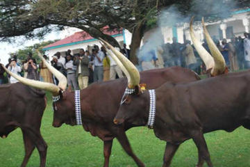 7 Days Odyssey at the Heart of Rwanda Wildlife