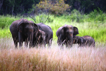8-Day Private Tour: See It All Sri Lanka Tour