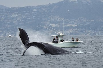 Ultimate Whale & Dolphin Watching Experience with Captain Nick in Newport Beach