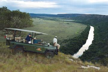 Amakhala Private Game Reserve Day Tour from Port Elizabeth