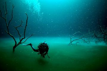 Angelita and Casa Cenotes Diving Tour from Playa del Carmen