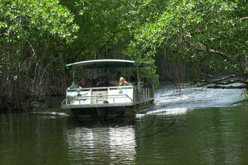 Appleton Rum Tour and Black River Safari Tour from Montego Bay and Grand Palladium