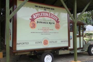 Appleton Rum Tour and Black River Safari Tour from Negril