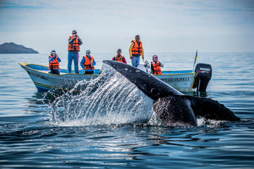 Baja Whale Watching Overnight Adventure in Magdalena Bay